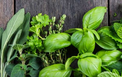 5 Nutritive Herbs for Better Food and Better Health