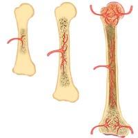 Vitamins for Bone Growth