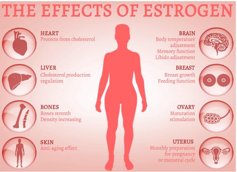 Estrogen Fight Aging
