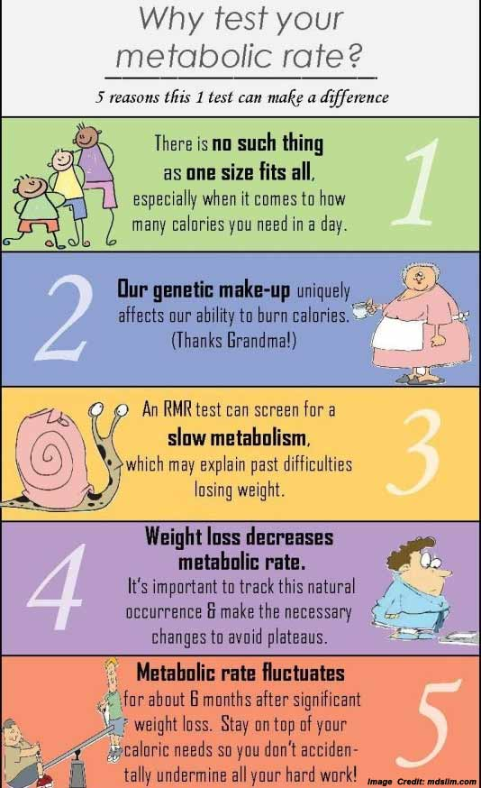 Metabolic Rate Info
