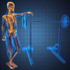 What is The Role of Exercise In Bone Health?