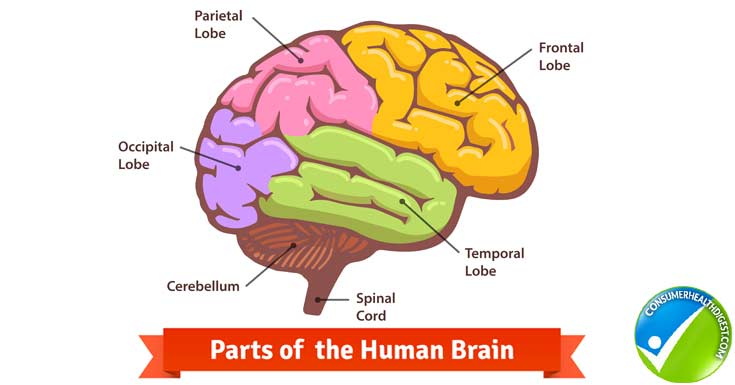 Symptoms and Conditions of Neurological Disorders