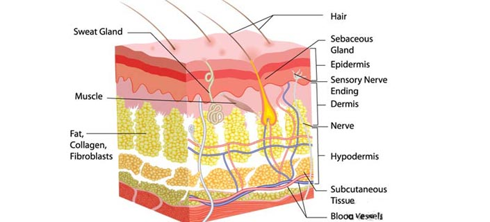 What Is Collagen For Wrinkle