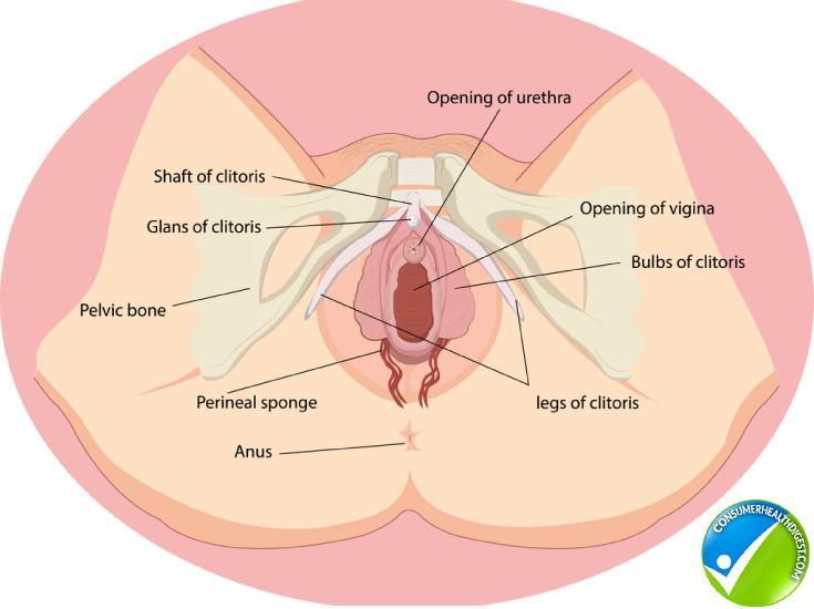 Understanding The C-Spot