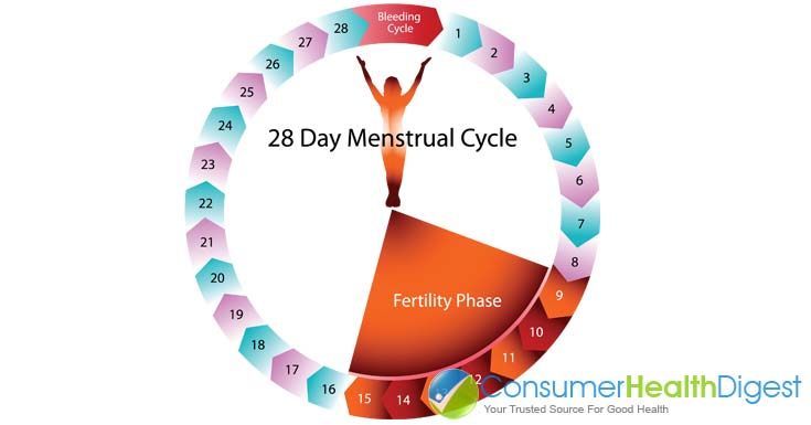 Understand Your Menstrual Cycle