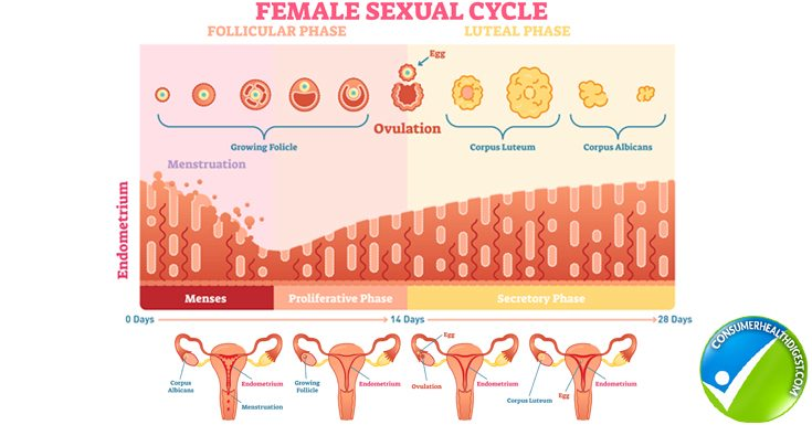 Understanding Vaginal Discharge