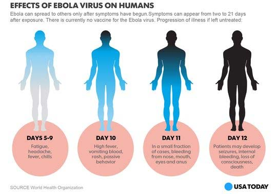 an analysis of the ebola virus and its effects on human body