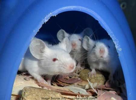 mice fed
