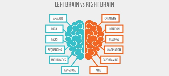 left versus right brain and how The theory is that people are either left-brained or right-brained, meaning that one side of their brain is dominant if you're mostly analytical and.