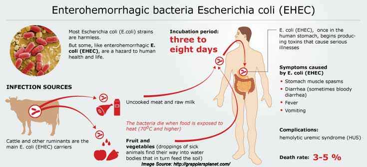 E Coli infections are caused by a bacteria An E Coli infection can make you feel sick Learn about E Coli symptoms treatment and more
