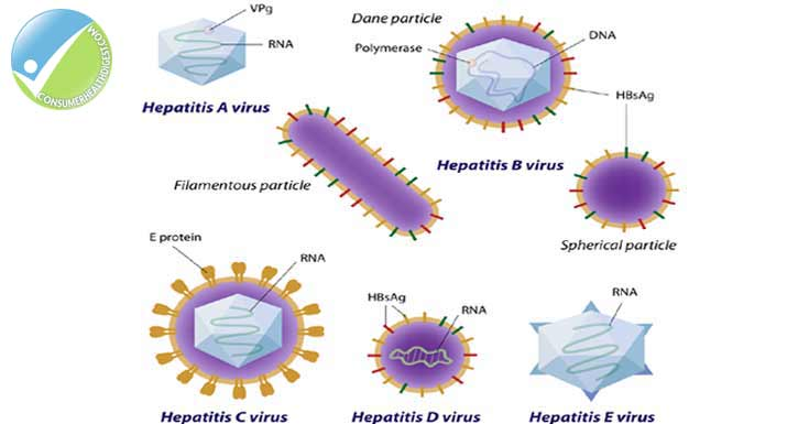 Hepatitis Virus: Types, Symptoms, Causes, Risk, Treatments and More