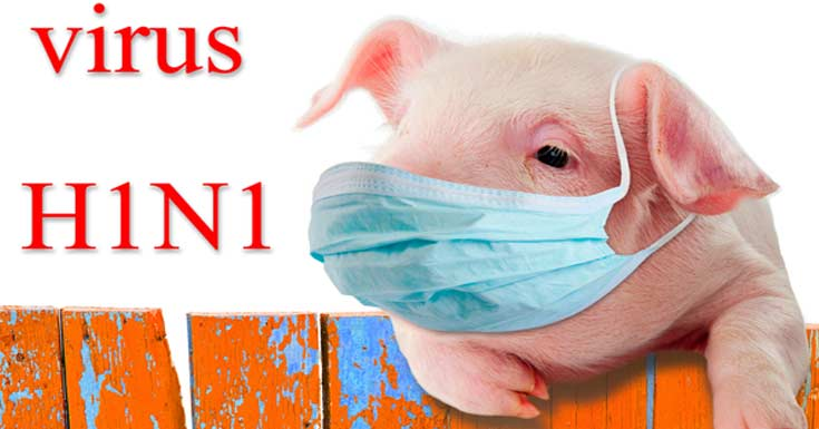 H1N1 Flu (Swine Flu): What are the Risk & Precautions to ...