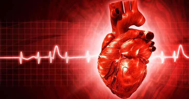 heart disease: types, symptoms, causes, diagnosis and treatment, Skeleton