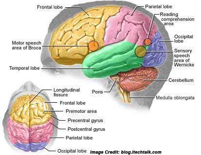 Brain Tumor Details