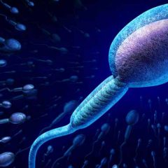 Infertility in Men is Linked to Chronic Prostatitis