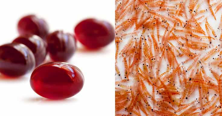 Krill Oil Health Benefits Side Effects Interactions