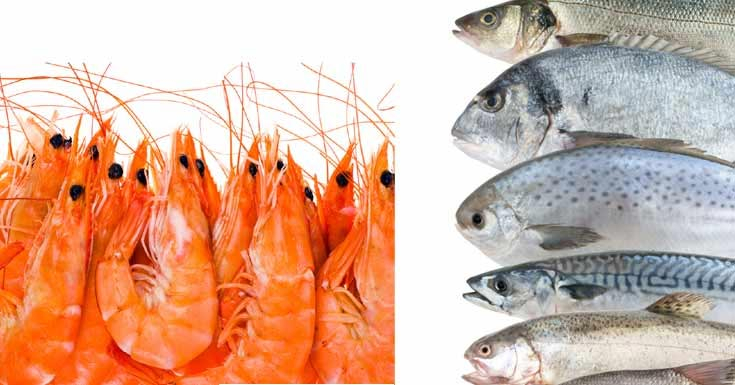 Krill Oil vs. Fish Oil