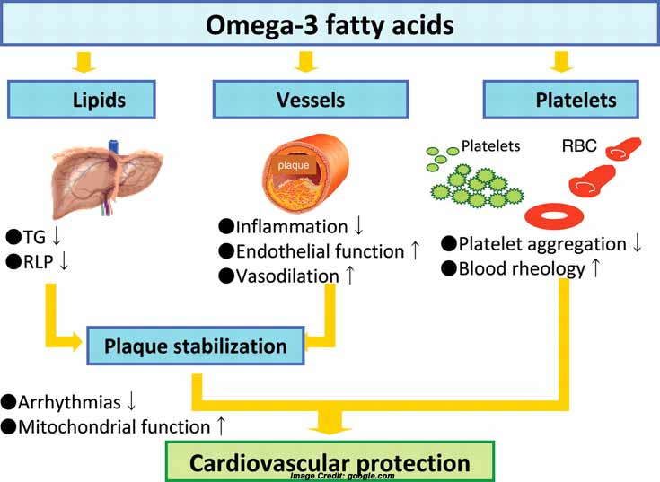 Omega 3 fatty acid info