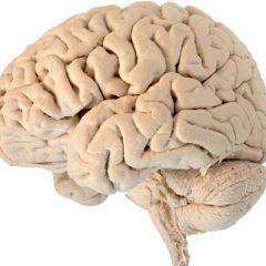 Leaky Brain