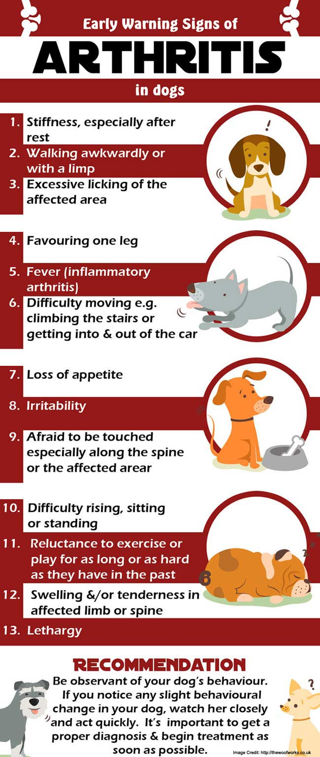 Best Dog Food To Help Arthritis