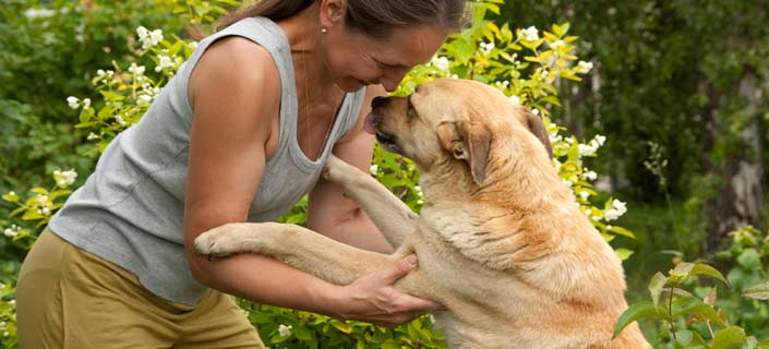 Dog Arthritis Joint Pain