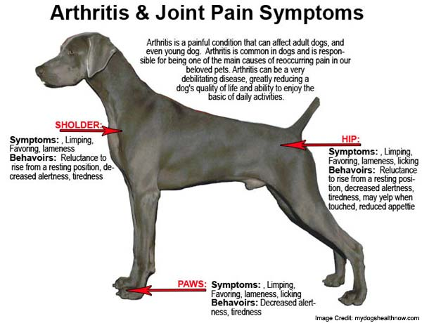 Dog Joint Pain Info