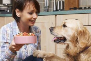 Diet and the Treatment of Joint Pain in Dogs