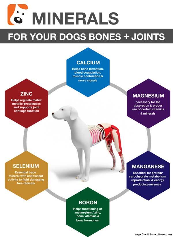 Dog Bone Mineral Info