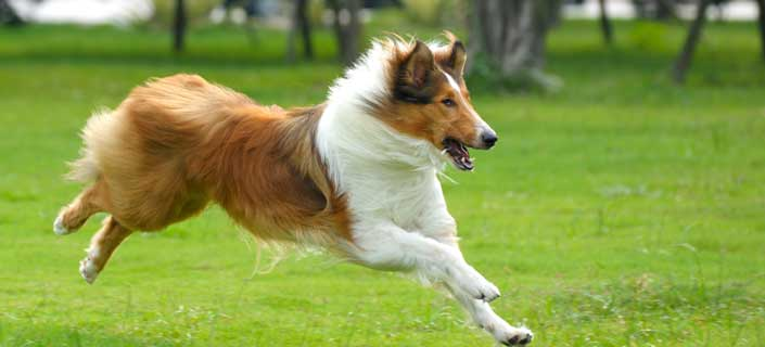 Know About Dog Joint and Hip Pain