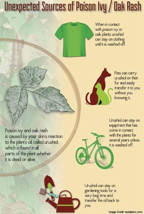 Poison Ivy Info