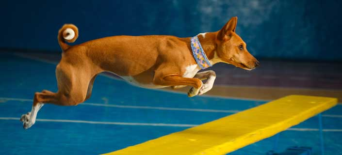 Preserve Healthy Joints In Sport Dogs