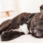 10 Ways to Help and Treat* an Arthritic Dog