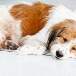 What are the Causes and Management of Joint Diseases in Dogs?