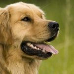 Dog Joint Health: Possible Joint Problems In Dog