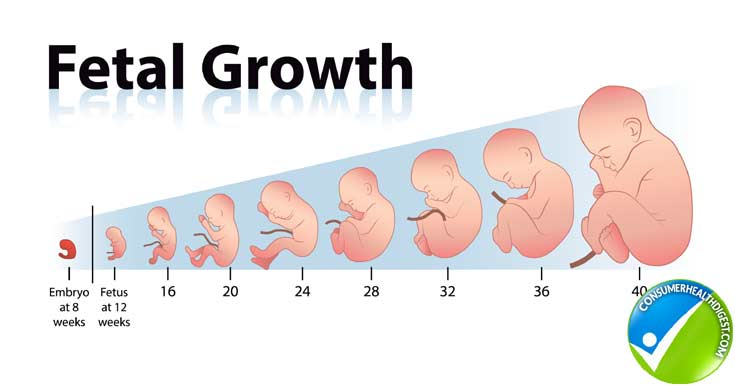 How Fetal Length And Weight Can Be Measured With Fetal Growth Chart?