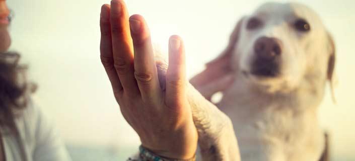 Ways to Treat Your Dogs Arthritis