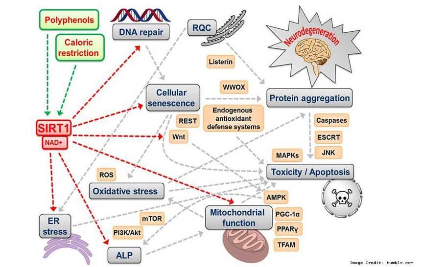 Neuroscience Info