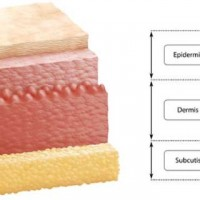 Understanding The Layer Of The Skin