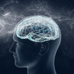 Can Adults Increase Their Brain Cell Production Rate?