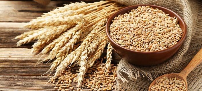 Wheat is Not Your Best Friend