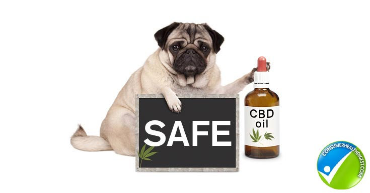 CBD Oil Safety