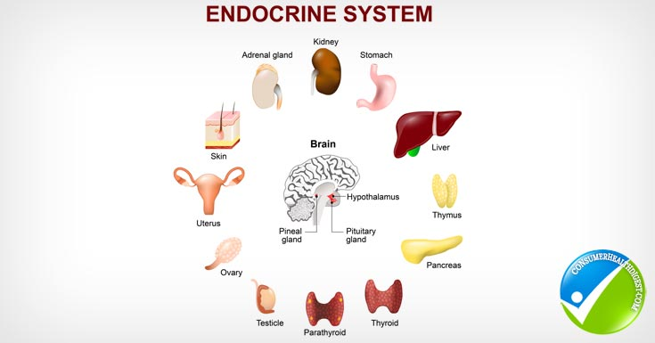 Hormone imbalance a comprehensive overview endocrine system detail ccuart Choice Image