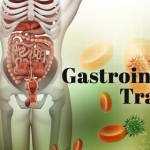 The Function And Importance Of The Gastrointestinal Tract