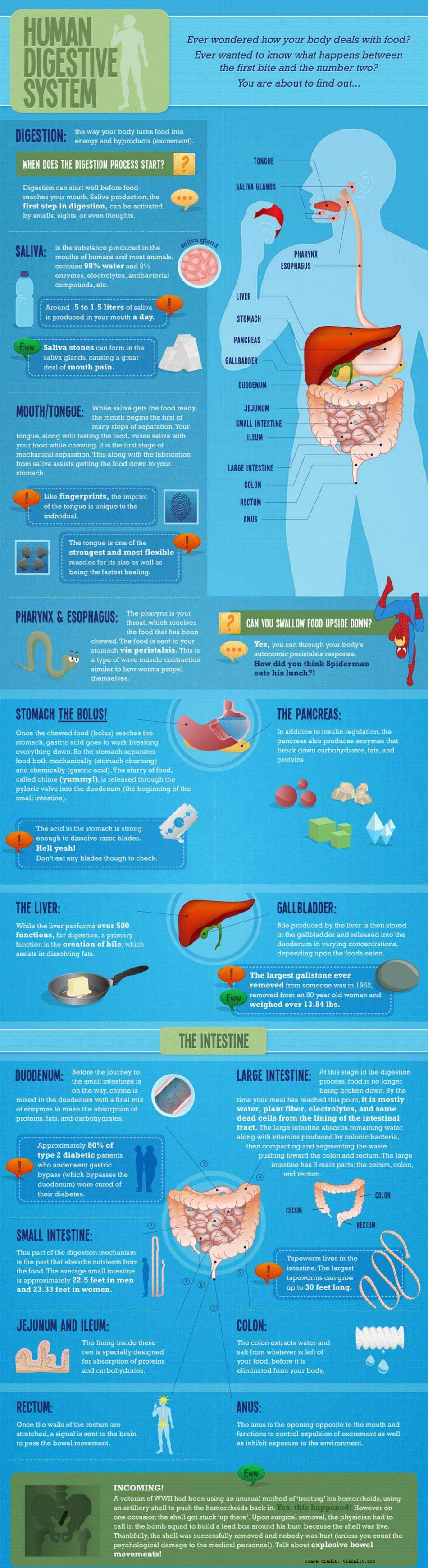 Human Digestive System Info