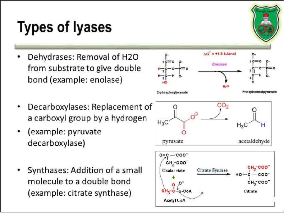 Types of Lyases