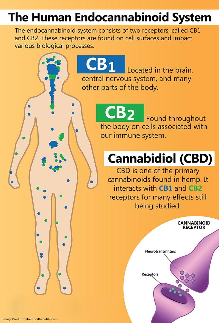 Cannabidiol System Work