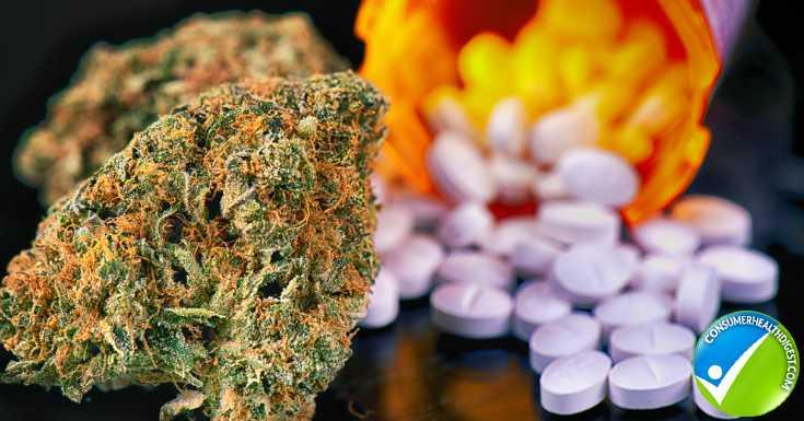 Hemp And Cannabis As Treatment