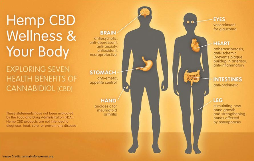 Hemp CBD Wellness Info