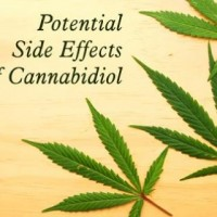 Potential Side Effects Of Cannabidiol