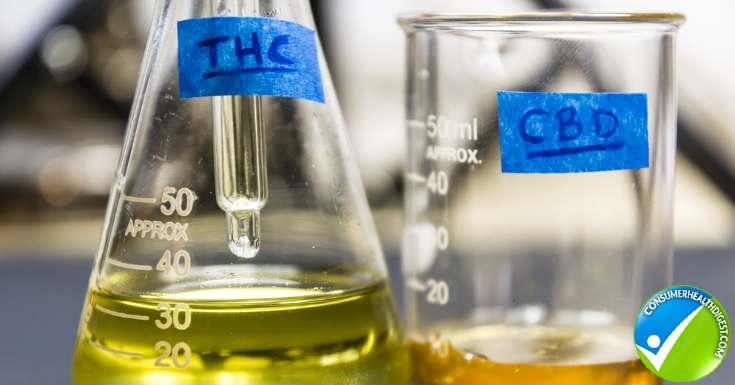 THC And CBD Oil